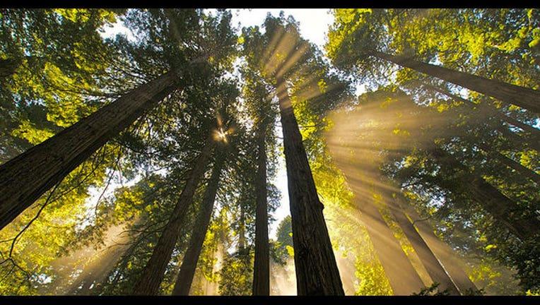 redwoods_1516390273755.jpg