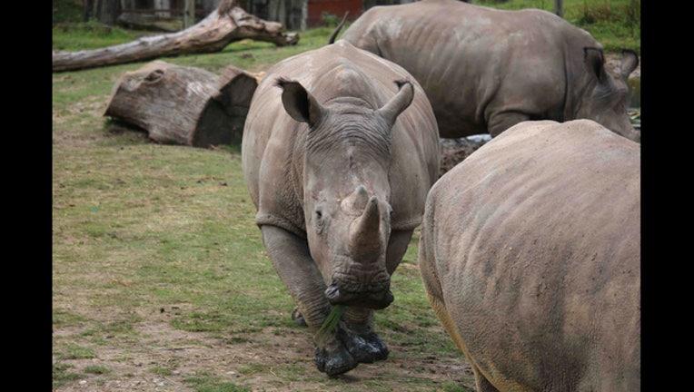 62712d94-France Rhinoceros_1488924485147