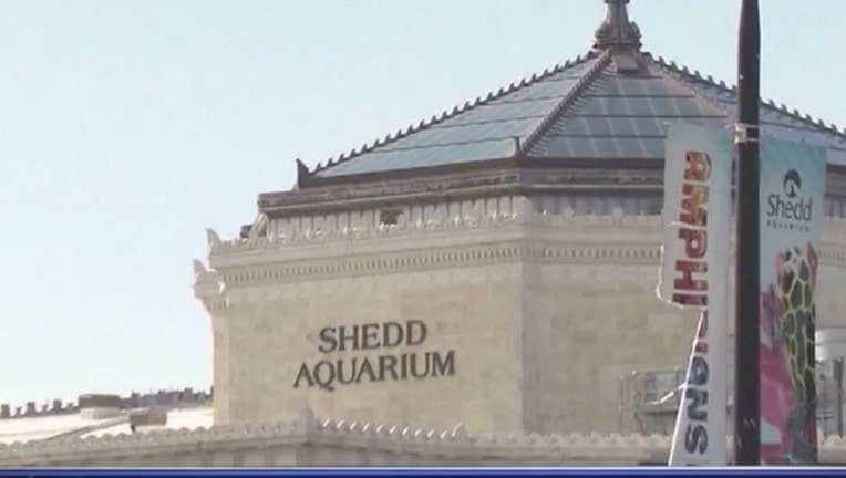 3bab3b01-shedd aquarium_1525211174663.jpg-404023.jpg