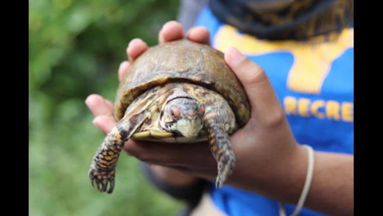 tortoise_1494546291807.jpg