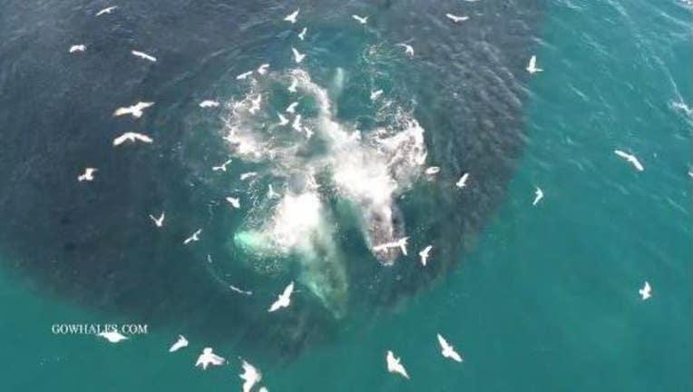 44c5d124-whales_new_1520977802674.JPG