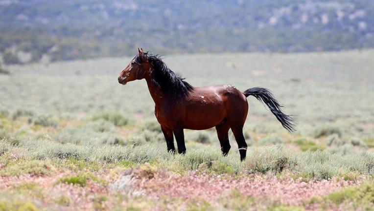 3d0f2552-wild-horse-GETTY_1553036371009-407068.jpg