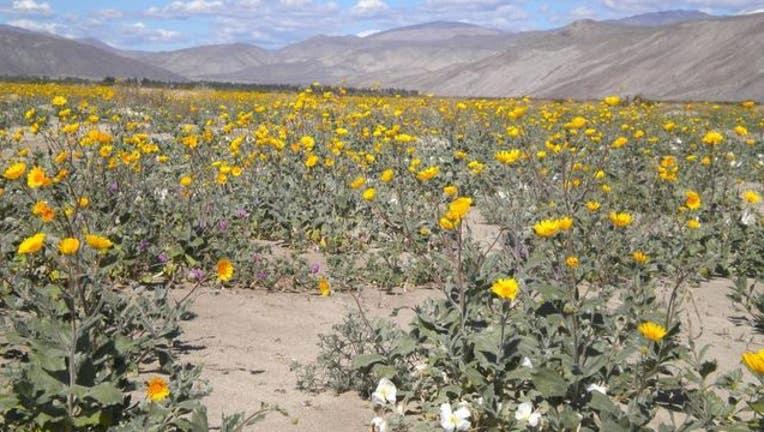 25c44bd3-wildflower_1552068078936.jpg