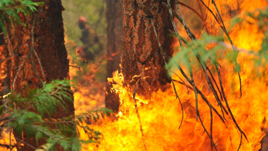 California fires may have killed hundreds of giant sequoias
