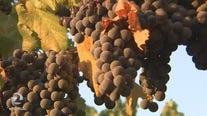 PG&E shutdown idles wine crush, wineries trying to catch up