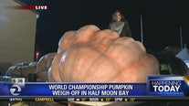 Annual pumpkin weigh-off