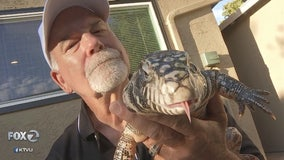 Thieves steal duffel bag from San Jose parking garage with pythons and blue-tailed lizard inside