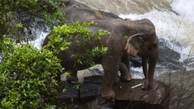 6 elephants fall to their death trying to save fallen calf at Thai waterfall