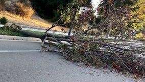 Nine injured when tree falls at Martinez farmers market