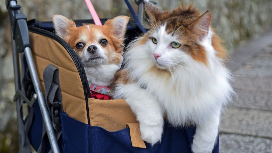 dog-and-cat-together-GETTY.jpg
