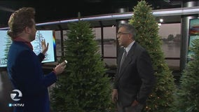 Fake or real? The Christmas tree debate lives on