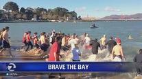 Brave the Bay