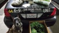 Five pounds of marijuana found during San Bruno traffic stop