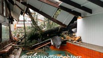 Tree falls into home in Montclair district of Oakland