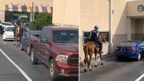 Pinellas Park police horse goes through Starbucks drive-thru line