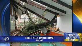 Large tree causes significant damage to Oakland home