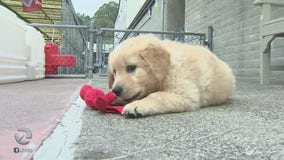 Bay Area Guide Dogs star in new Disney+ docuseries