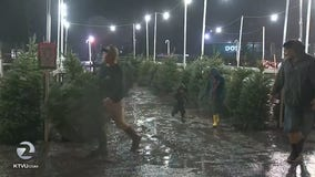 Residents brave rain in Santa Rosa for fresh Christmas trees
