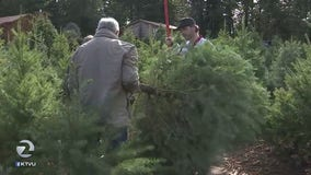 Christmas trees serve a purpose after the holiday