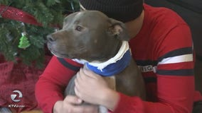 Pit bull shot in Menlo Park, owner says attack was unprovoked