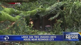 Large Oak tree falls on home, power lines in Emerald Hills