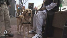 Comfort dog joins police force in San Rafael