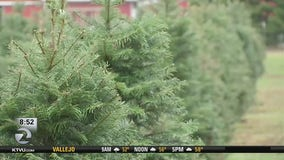 Christmas tree shortage pushes prices higher