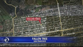 Man and woman taken to trauma center after tree falls on them