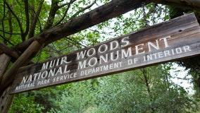 Man killed by falling tree in Muir Woods identified