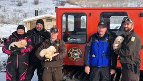 Utah couple rescues 'adorable' puppies living inside sheep carcass on snowy mountain