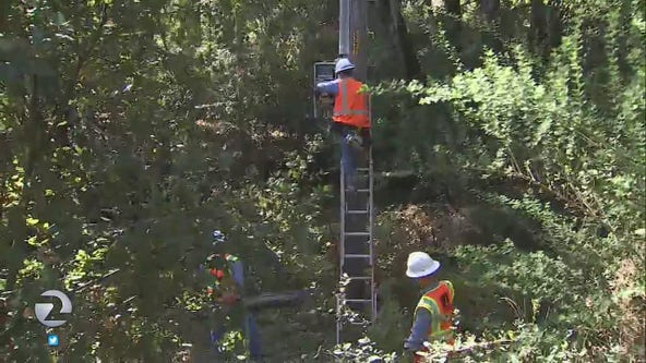Judge may order PG&E to hire more tree trimmers to prevent wildfires