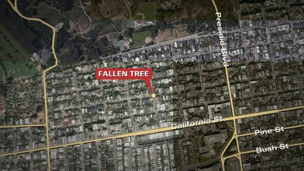 Two injured by falling tree in Presidio Heights