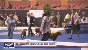 Golden Gate Kennel Club Dog Show underway in Daly City's Cow Palace