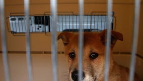 Governor Newsom calls for California to be a no-kill state for animals in shelters within 5 years