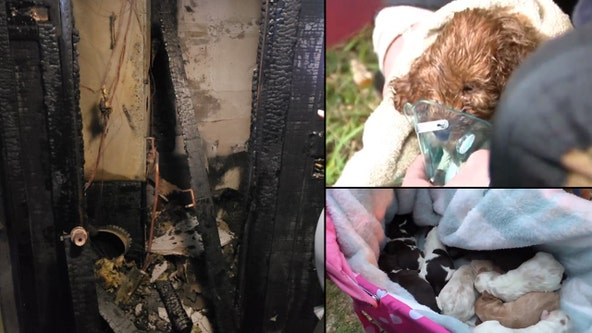 19 dogs killed after fire breaks out at Orange County breeder's home