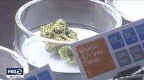Mill Valley pot delivery seeks green light, schools oppose