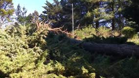 Many trees, wires down as windy weather hits Bay Area; high wind advisory through 7 a.m.