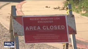 South Bay park closed after girl attacked by mountain lion