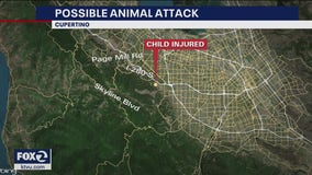 Rancho San Antonio park closed after girl, 6, attacked by suspected mountain lion