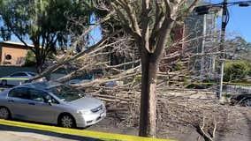 Tree down in Alameda