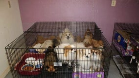 Prosecutors: More than 130 animals rescued from suspected puppy mill in New Jersey