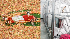 Kansas City shelter posts photo of empty kennels after Super Bowl champ Derrick Nnadi pays adoption fees
