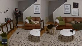 Very good dog helps owner with his laundry in adorable video