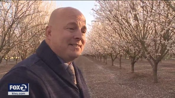 Selfie seekers trespass to capture almond orchards in full bloom, sheriff gets involved