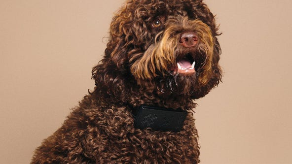 Cursing dog collar will let you know what your pup is really thinking when it barks
