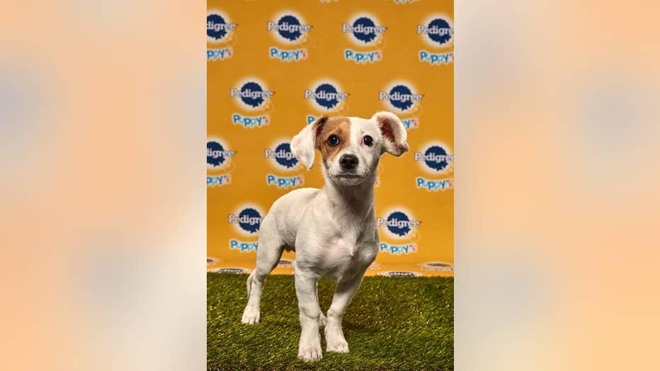 Jack-Puppy-Bowl.jpg