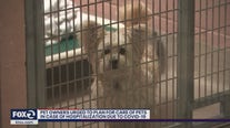 Pet owners urged to plan for care of pets in case of hospitalization due to COVID-19