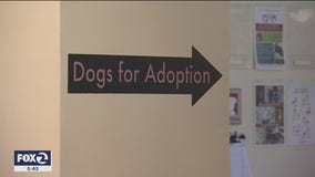 Oakland Animal Services clears space for potential pets of COVID-19 patients