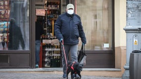 'We're sure that dogs could detect COVID-19': UK group says it's training canines to sniff out virus
