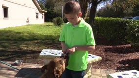 After spending much of his life in foster care, boy now spends much of his free time caring for shelter dogs